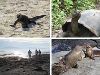 galapagos_collage.jpg