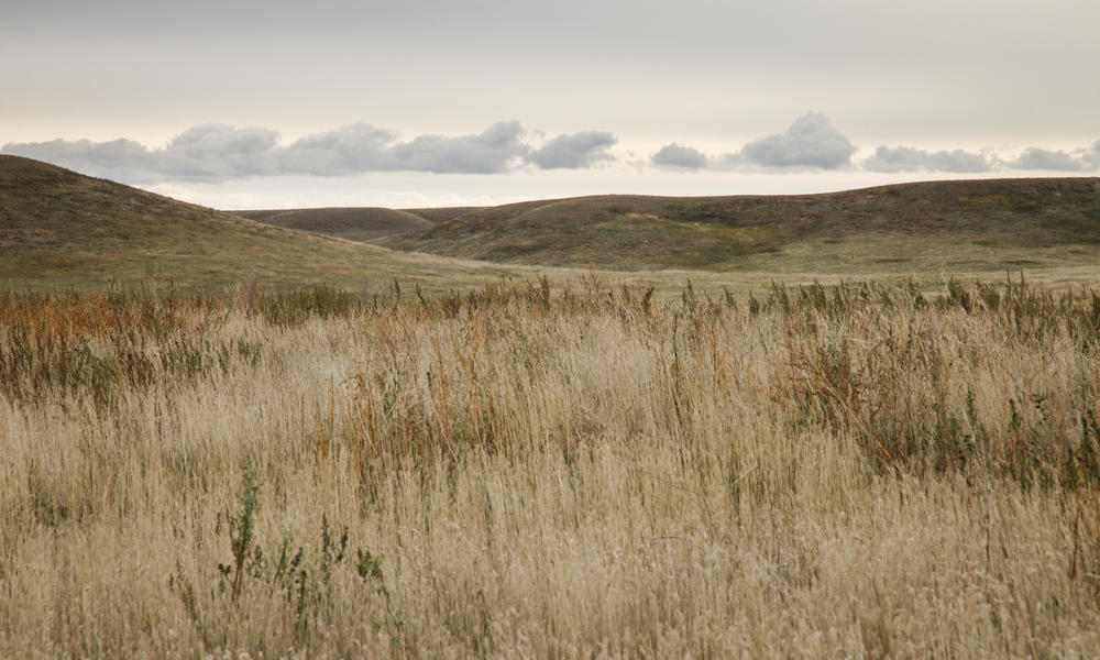 Daysedge sodakgrasslands 03