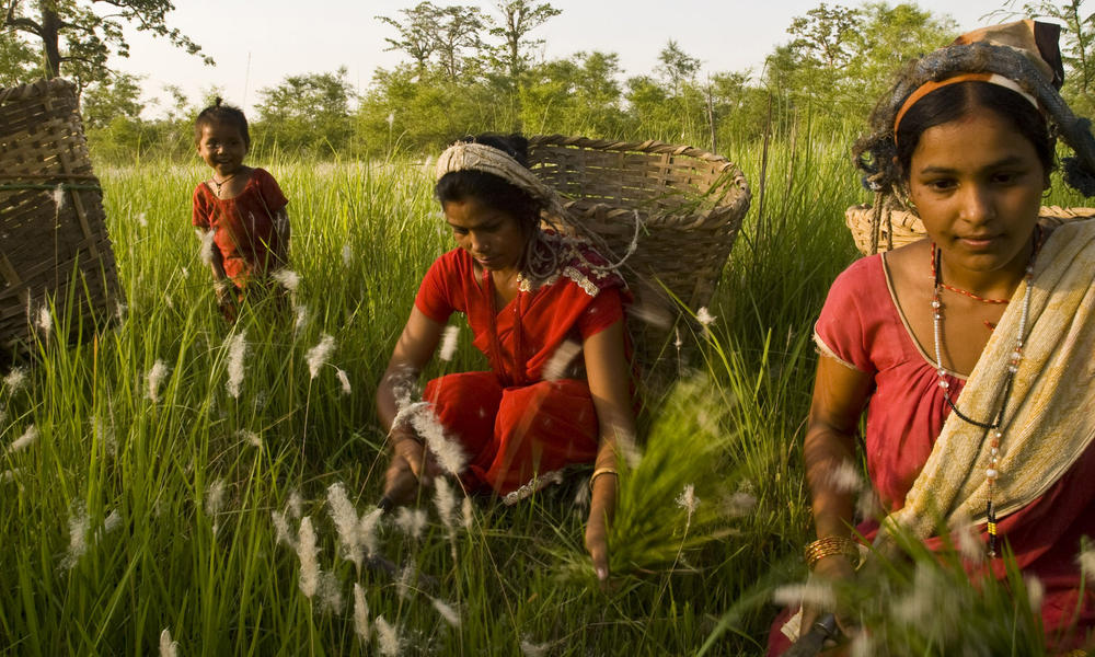women gathering grain