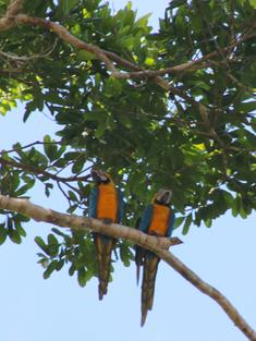 6 Amazon bird macaws travel