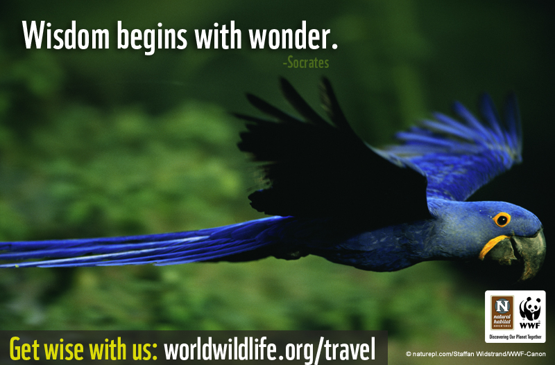 Wisdom begins with wonder.
