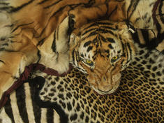Illeagal wildlife trade 8.7.2012 impacts hi 107234
