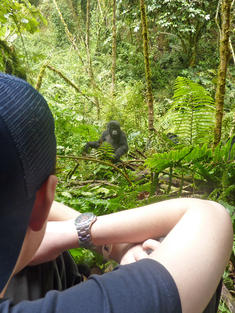 person gorilla traveler Uganda TRAVEL ONLY