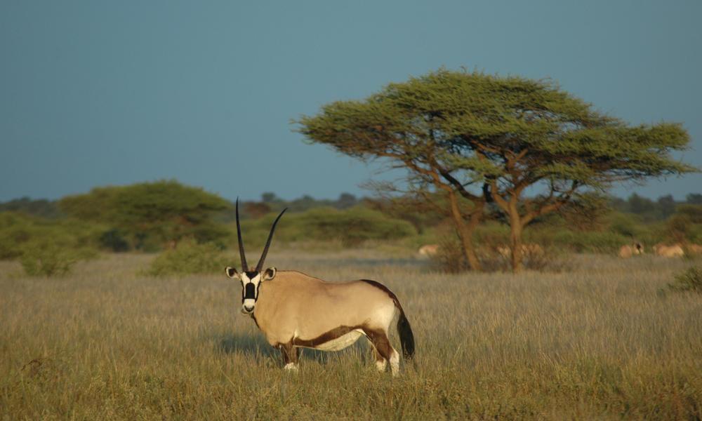 Botswana Safaris Tours WWFOkavango Basin