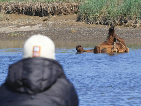 grizzly plays in water