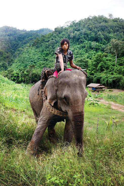 A young logger and his elephant emerge from the Tanintharyi forests. Thousands of captive elephants like this one are used to harvest teak in Myanmar. With new restrictions on timber exports due to take effect in April, the use of elephants to extract log