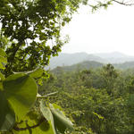 Churia Range forest, Nepal, Himalayas
