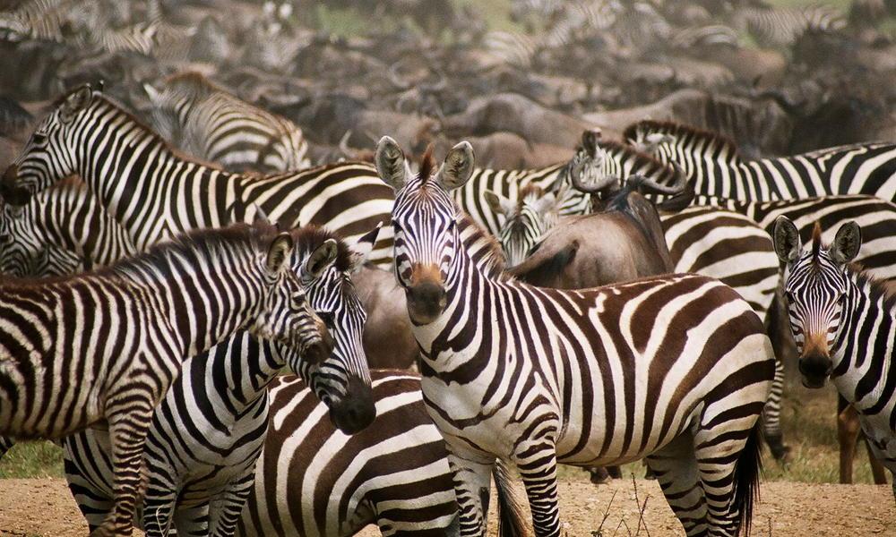 1a4ae3bf2b33 Tanzania Safaris | Tours | WWF