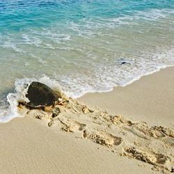 Hawksbill_turtle_07.24.2012_help