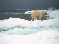 Polar bear2 07.24.2012 help