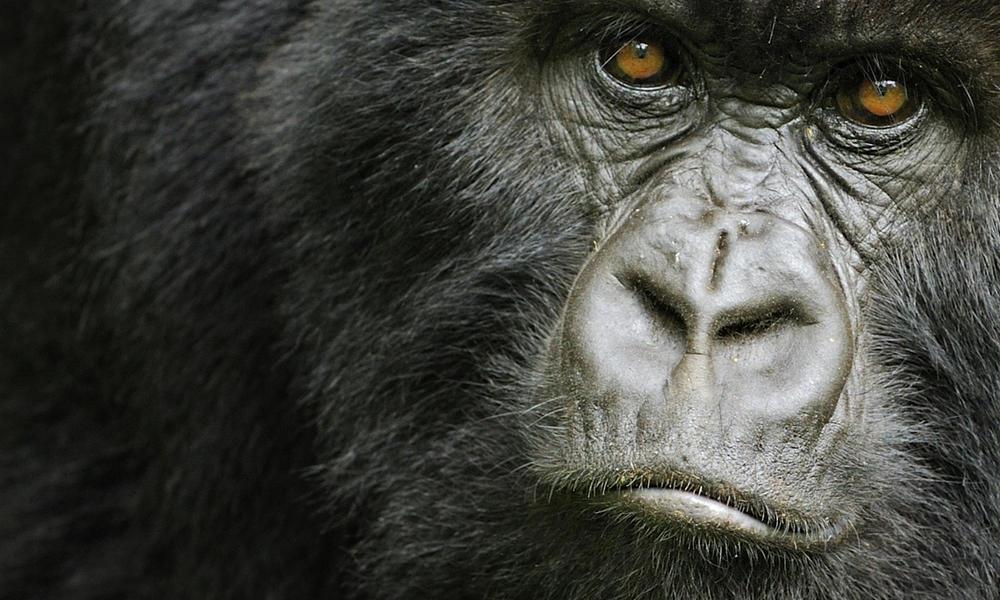 301360 natureplcom Andy Rouse WWF-Canon Rwanda MG
