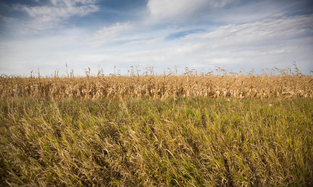 grasslands of Rockhills Ranch, Lowry, South Dakota