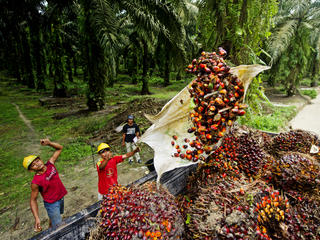 palm oil truck