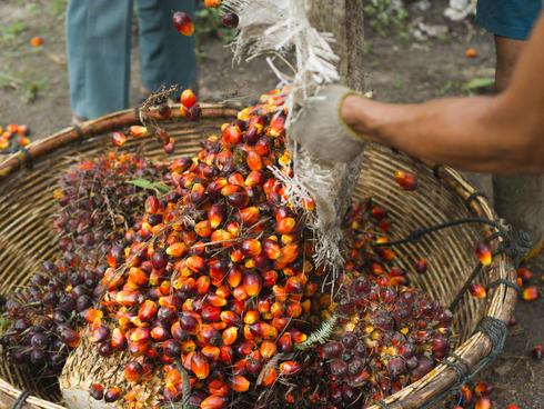 palm oil basket