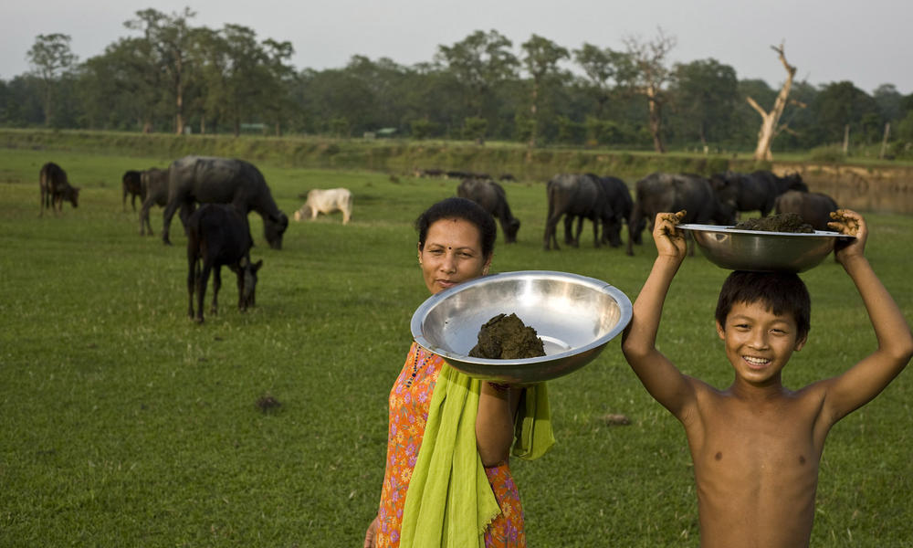 A woman and boy collecting manure in Chitwan National Park Buffer Zone. Villagers can use the collected manure to produce methane gas in order to cook with rather than use firewood.