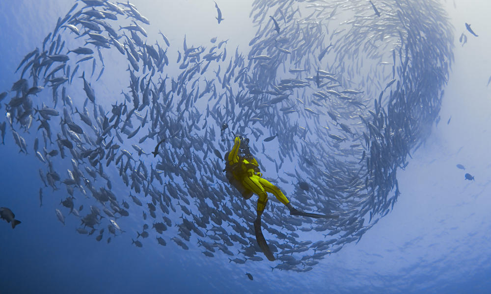 Diver silhouetted against a heart-shaped school of Big-eye trevallies in Bali, Indonesia