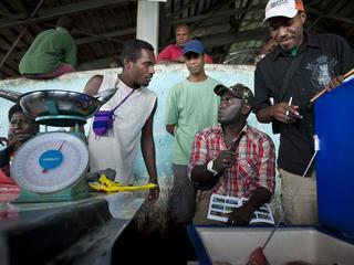 solomon island fishery