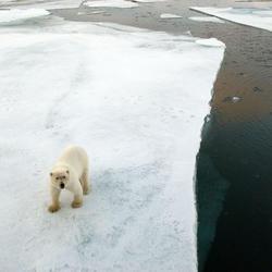 Polar bear3 07.24.2012 help