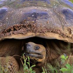 Giant tortoise 07.24.2012 help