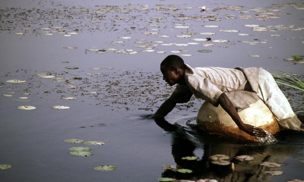 Hadejio-Nguru wetlands Nigeria