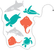 Bycatch Illustration