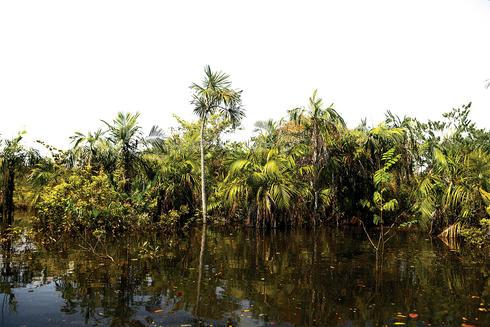 Amazon forest scene