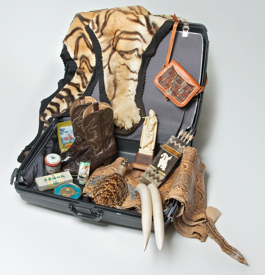 Suitcase with illegal wildlife products