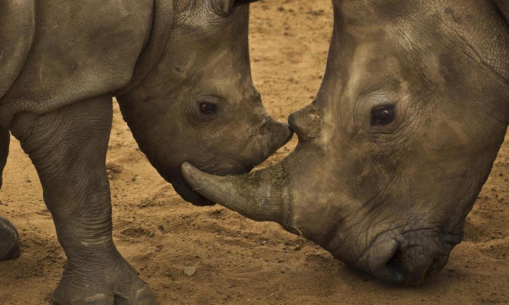 rhino 298915 hero