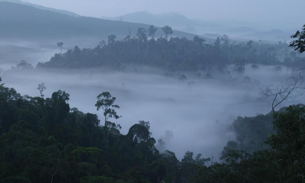 Sabah, North Borneo, Malaysia.