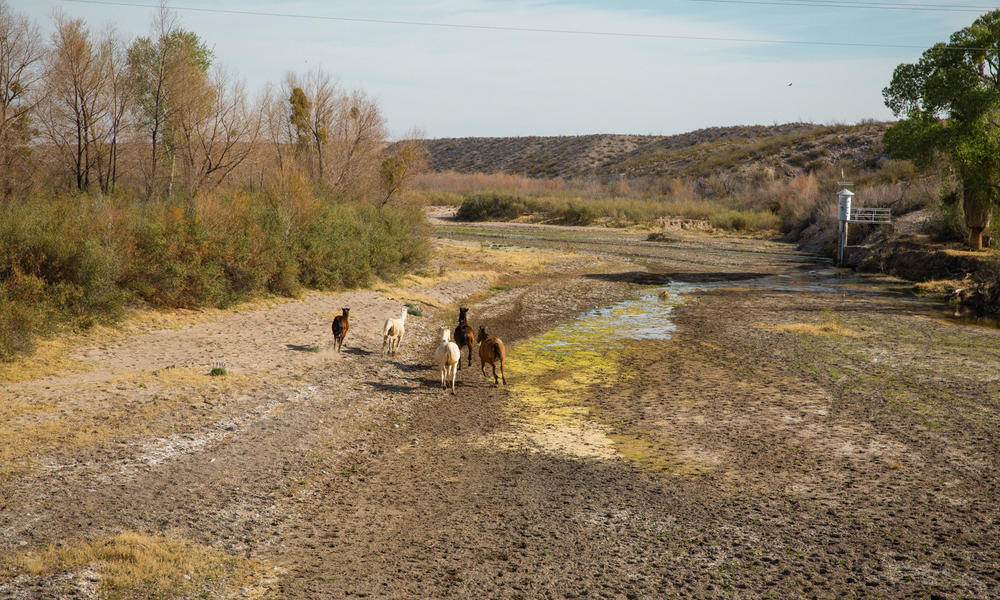 dry riverbed with horses