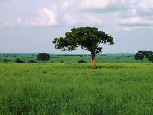 Grasslands in the Democratic Republic of Congo