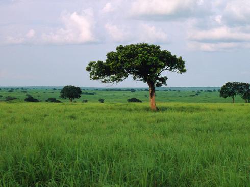 Grasslands in the Democratic Republic of Congo