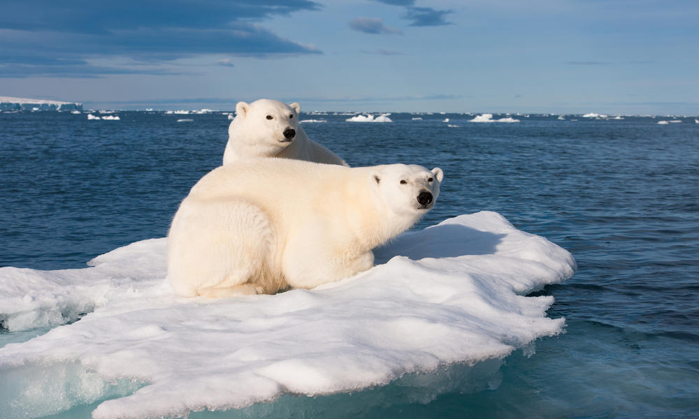 Two polar bears on a piece of ice in the Artic Ocean, Svalbard
