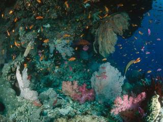 great barrier reef 106677
