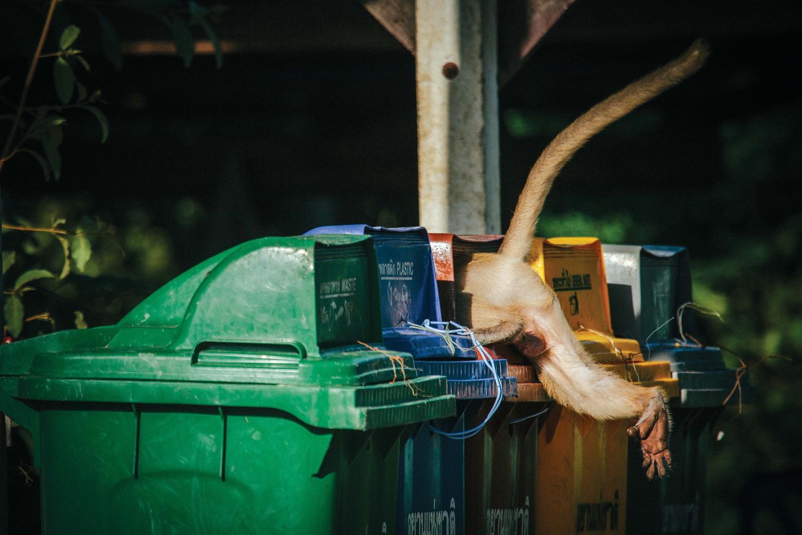 macaque in trash