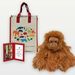Adopt a Orangutan