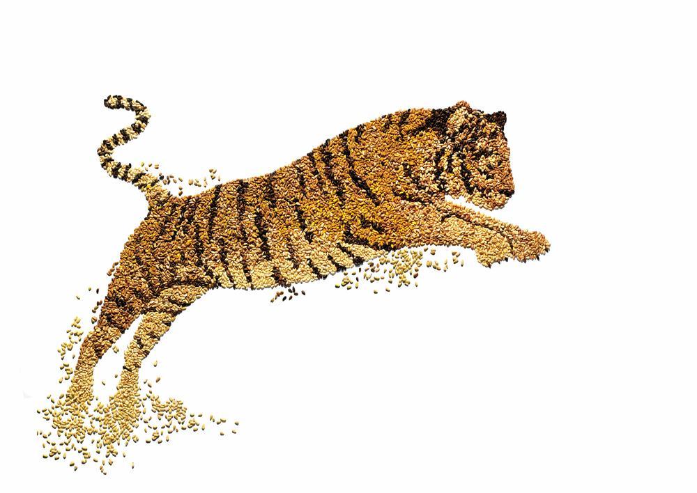 David arky wwf tiger