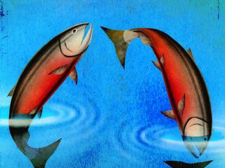 Salmon in a circle