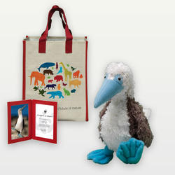 Blue footed booby plush 07.24.12 help