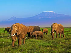 Kilimanjaro-elephants-web_112370