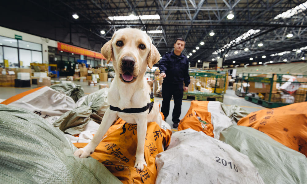 sniffer dog on bags