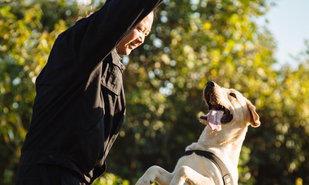 sniffer dog and handler