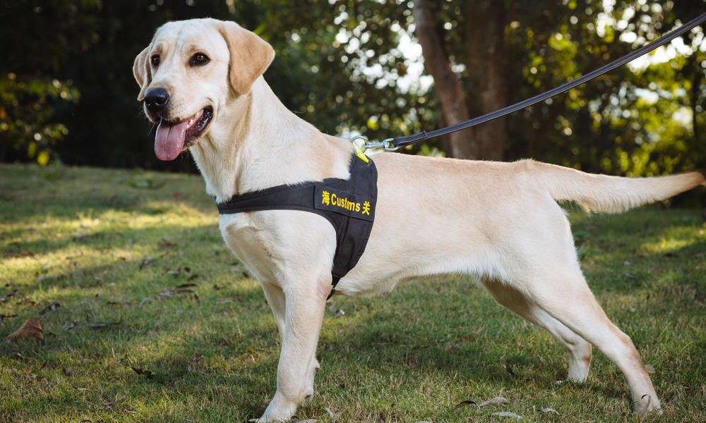 sniffer dog posing