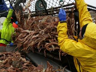 pulling in crab pot