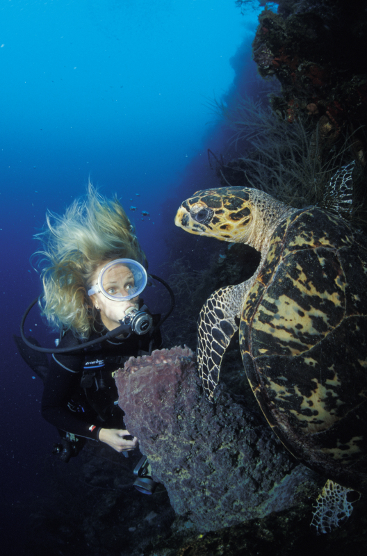 Scuba diving next to a hawksbill turtle