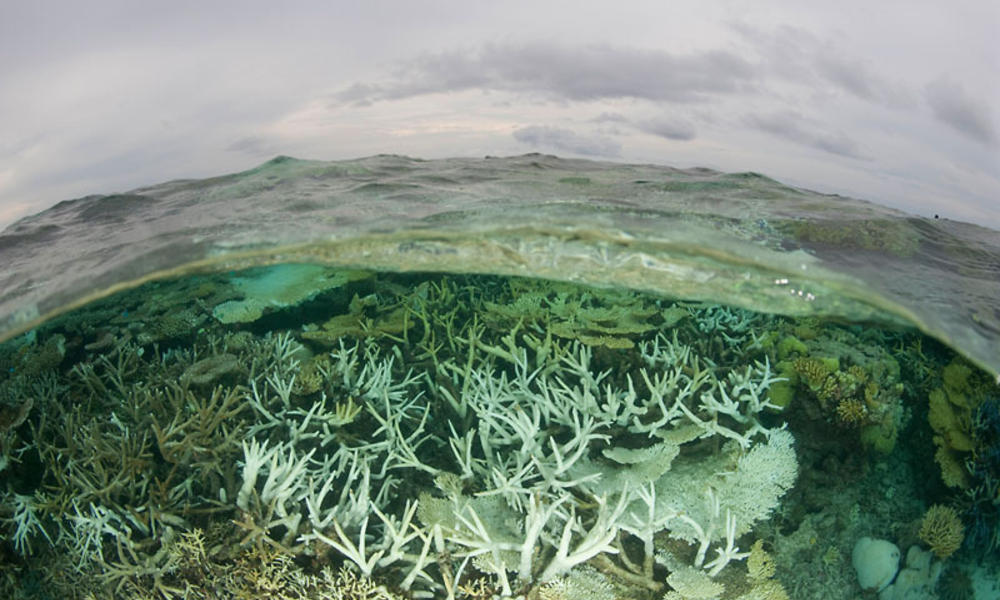 Tubbataha Reefs Natural Park lagoon looking bleached, Palawan, Philippines