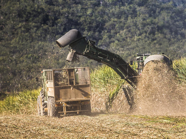 Harvesting sugarcane in Mackay, Queensland, Australia.