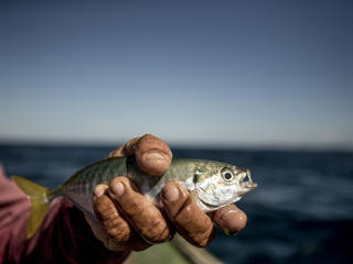 A fisherman holds a caught fish.