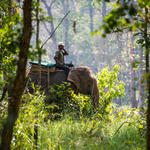 On elephant on patrol duties, Bardia National park, Terai Arc Landscape, Nepal