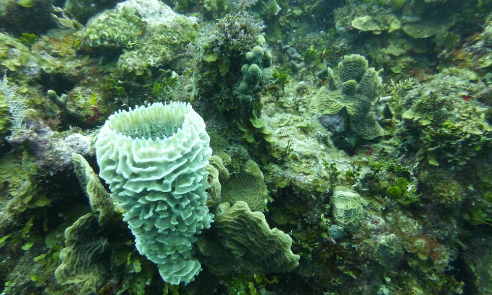 Mesoamerican_Reef_7.25.12_Threats